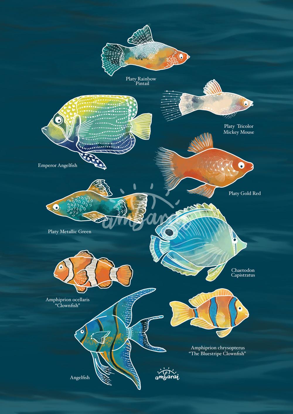 Láminas. Lámina con peces tropicales de acuario